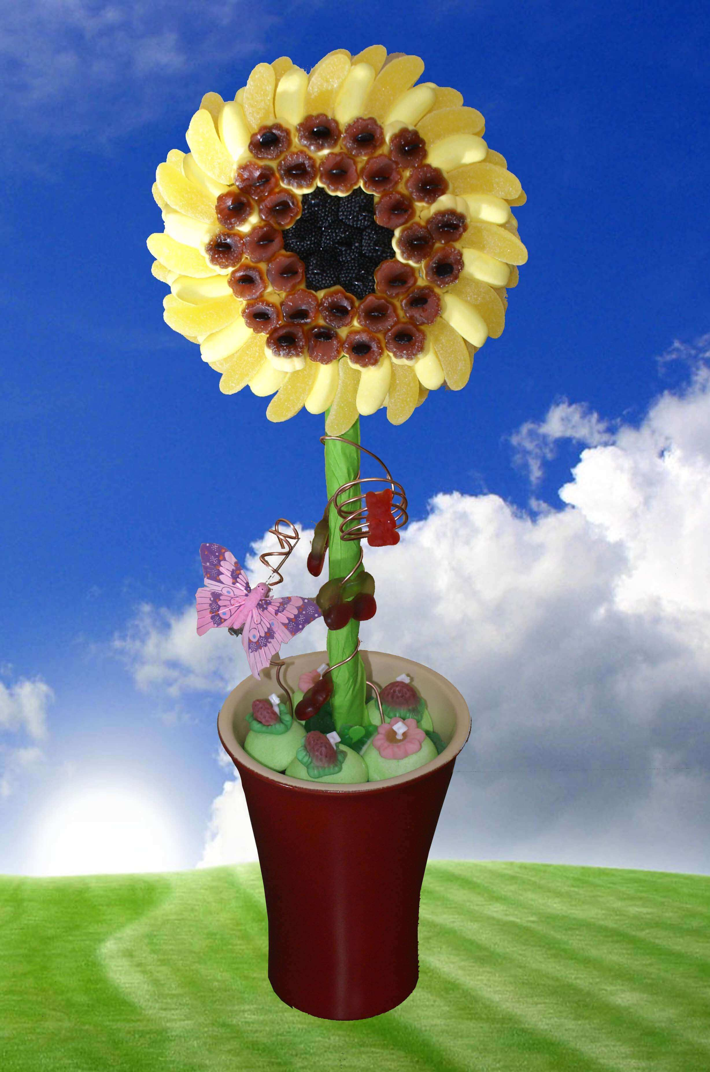 fleur de tournesol en pot